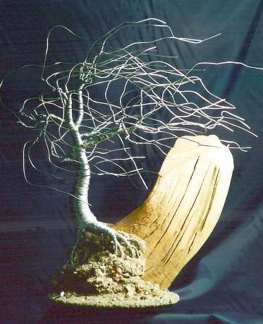 Wind Swept on Driftwood, wire tree sculpture