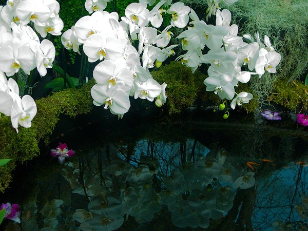 Orchid Pool