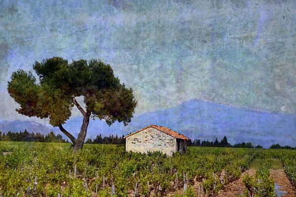 Tree in Vineyard