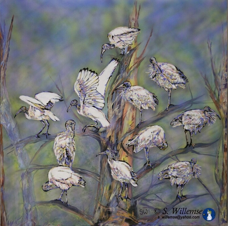 Ibis Art Australian Birds Susan Willemse