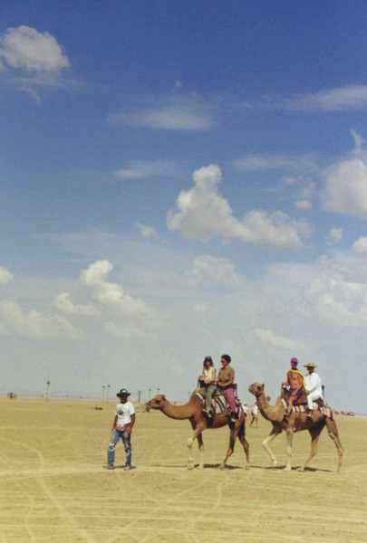 Camels of the Playa