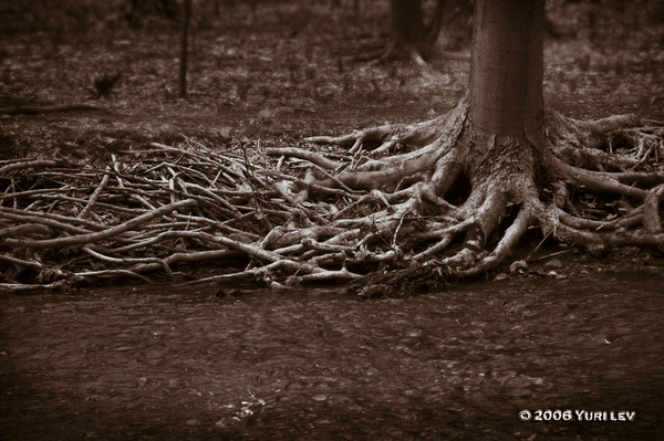 Sepia Roots