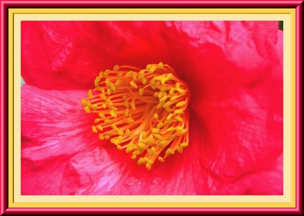 Pink Flower Framed