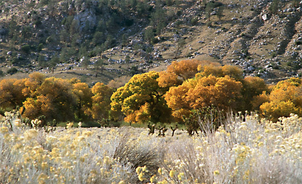 Kern Valley Fall Colors 2