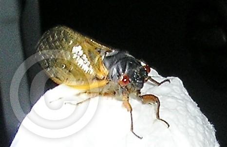 Dem' bugs
