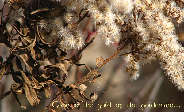 Not so golden