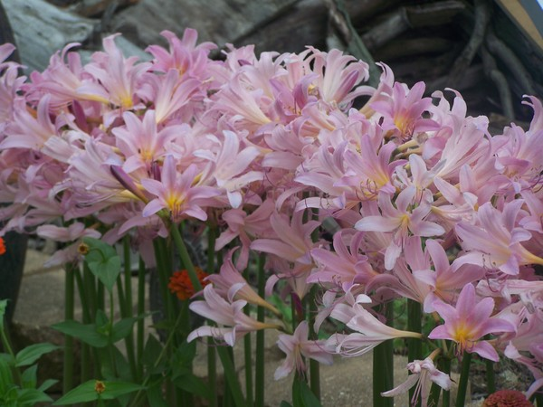 Mystic Lily Garden