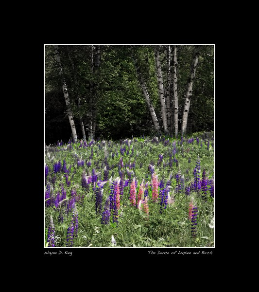 Dance of the Lupine and Birch Poster