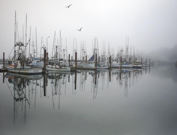 Foggy Docks