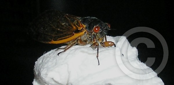 Dem' bugs 2 red eyes and all