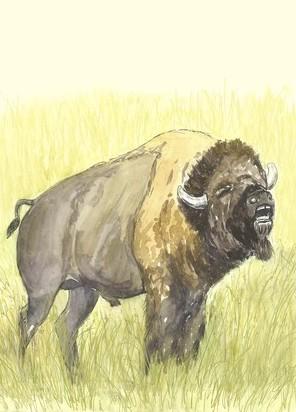 What Fun! I hear a bison