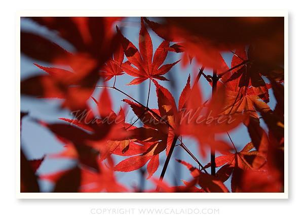 •Leaves I•