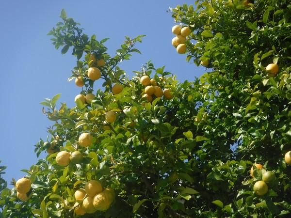Lemon Power