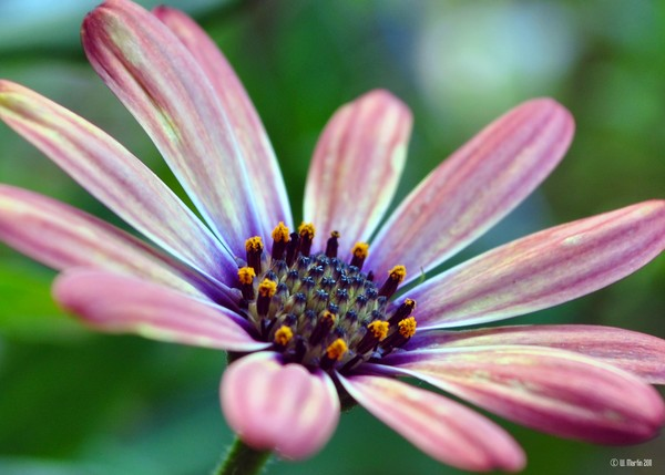 Flower in the Evening Sun