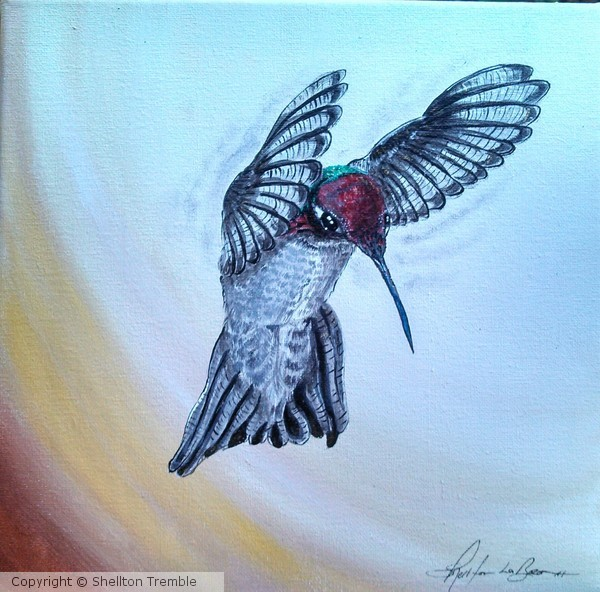 Hovering Hummingbird4