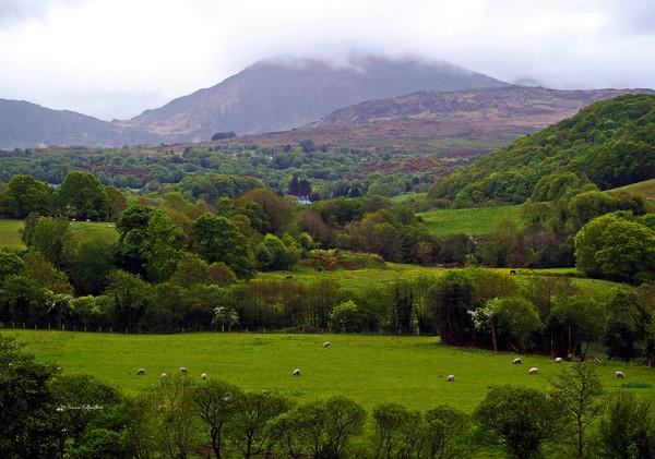 Irish Countryside II