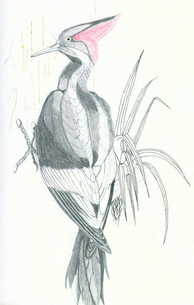 Evil Pecker