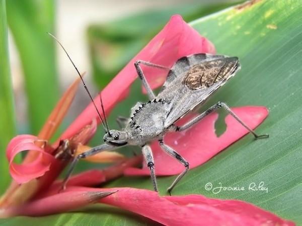 Ugly Bug
