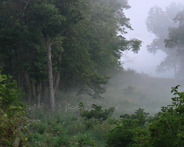 Walking Into The Mist