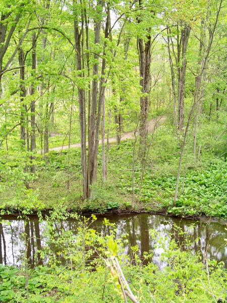 Stoney Creek in May