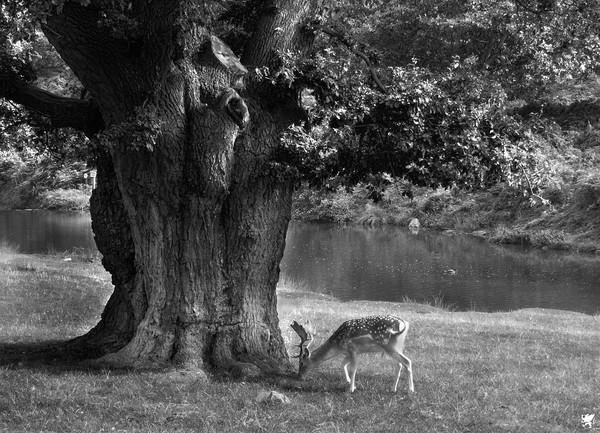 GRAZING UNDER THE TREE