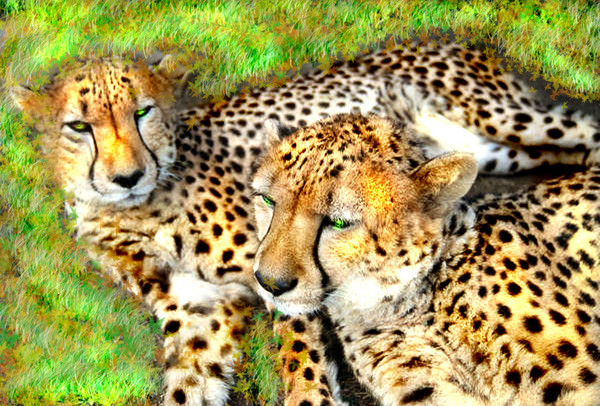 'Two Big Kitties Warming Themselves in the Sun