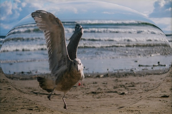 seagull bubble