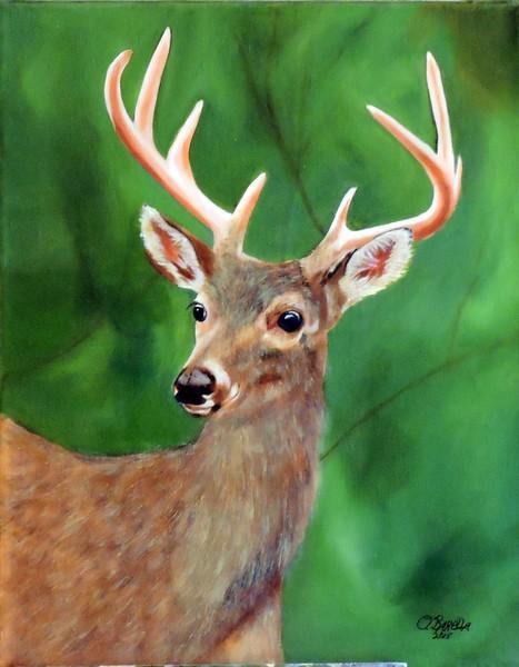 Five Point Buck Portrait
