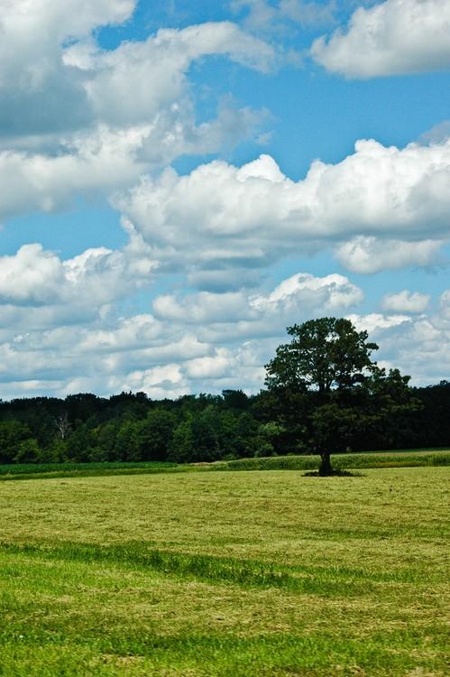 Country Horizon 2
