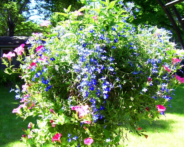 arbor plantings