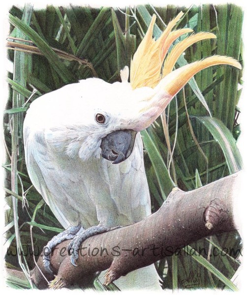 Cockatoo - Ballpoint pen art