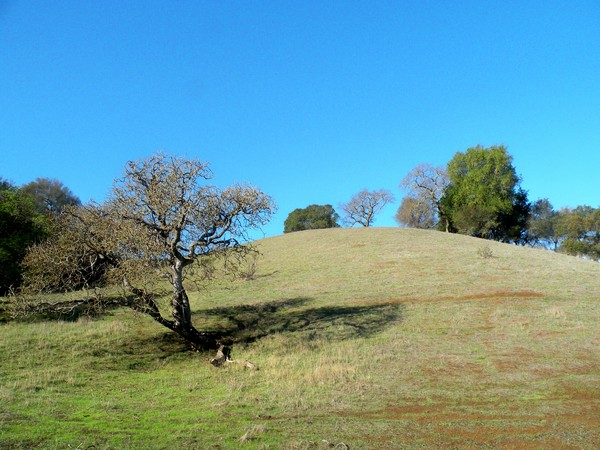 Flanks of Mount Burell