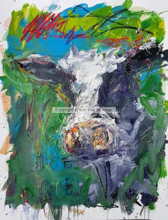 Cow Boe 1