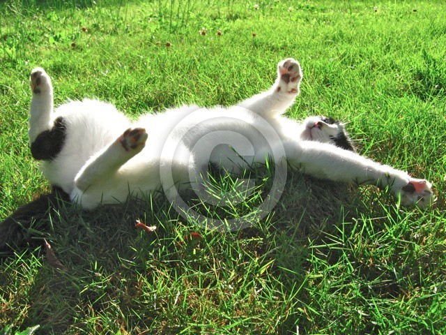 Mow Yow Stretching in grass