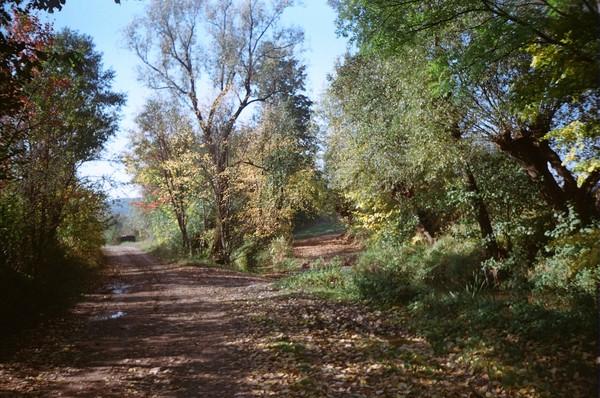 landscape from my village