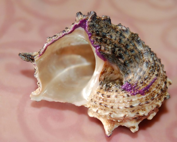 Passion Shell