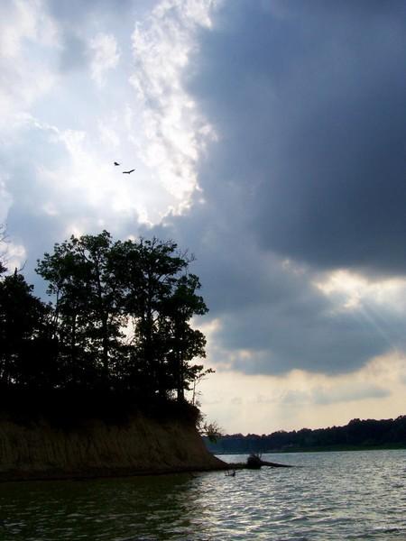 Lake Shelbyville Birds