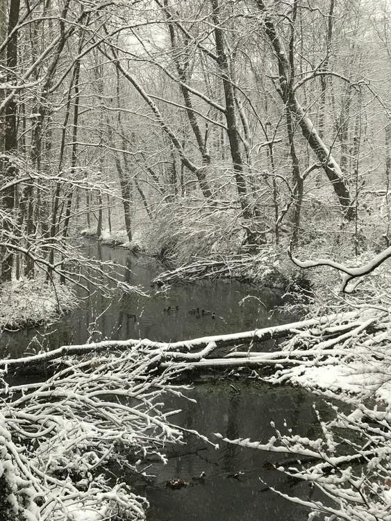 Springbrook snowfall