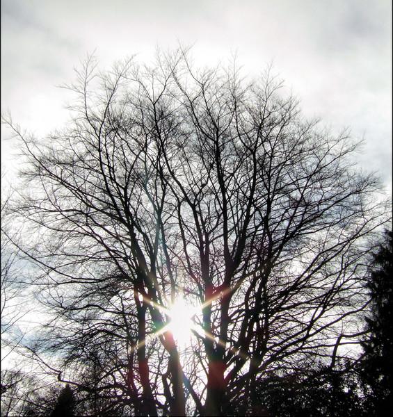 sunlight through the tree