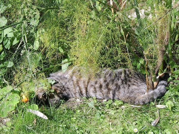 Bush cats