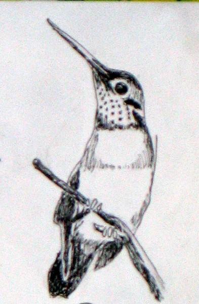Miss Hummingbird
