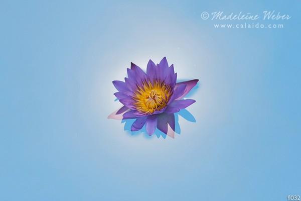 • Flowerart