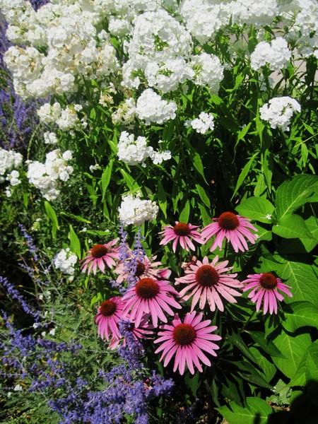 Flower Hedge 3