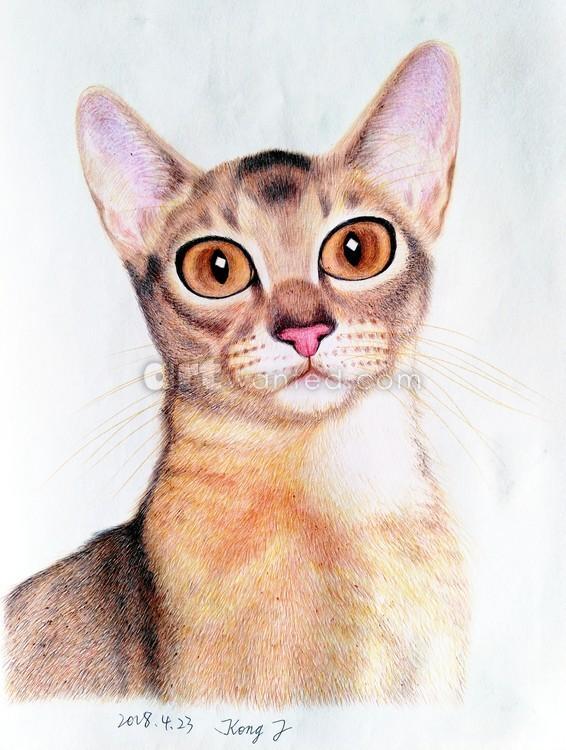 Portrait of cat_20180423