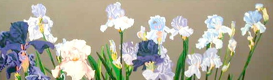 Long Group of Iris - sold