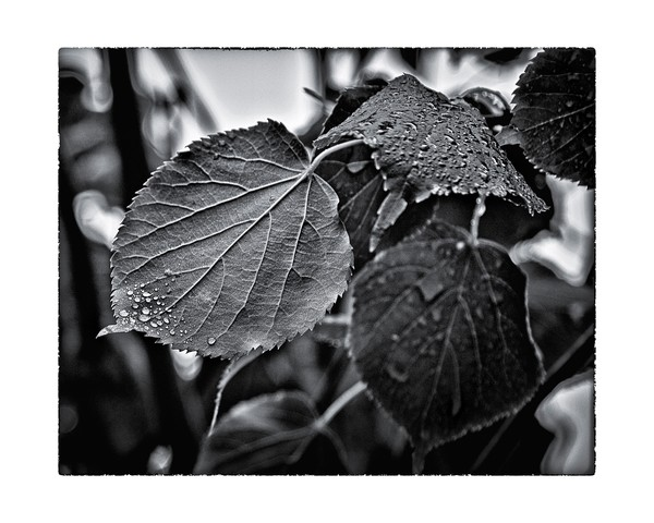 Raindrops After The Storm
