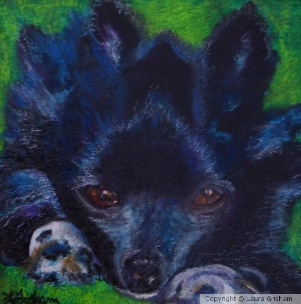 Purple Puppy