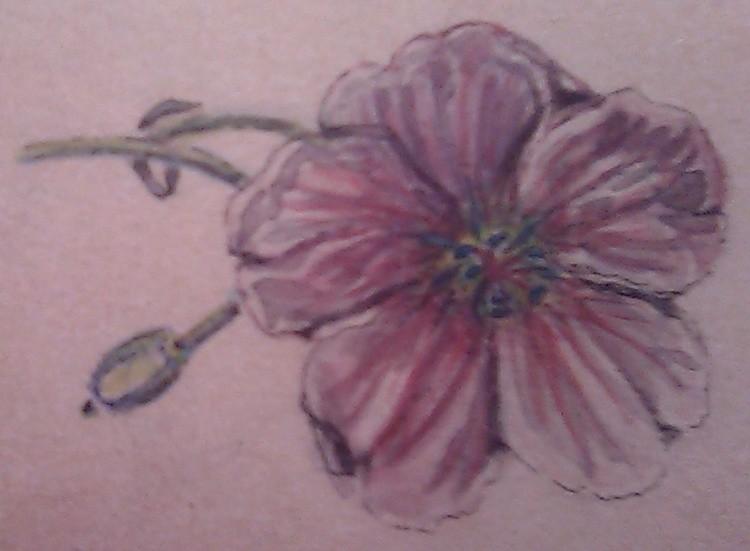 Purple Gleam Poppy Watercolor