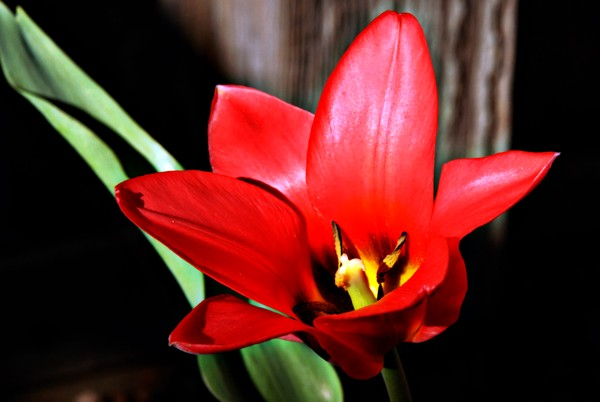 The Big Red Bloom