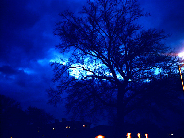 Eerie Tree Morning